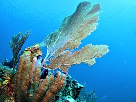 Belize 5-day 2-tank Diving Tour