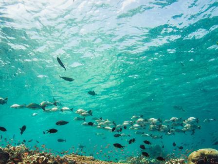 PADI Aware Fish Identification Course, Belize