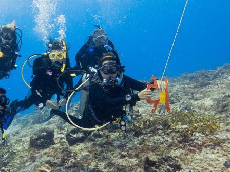 PADI Drift Diver Course, Belize