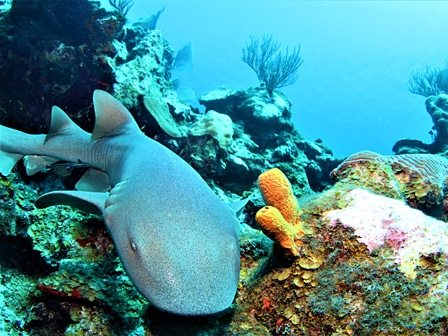 Hol Chan Shark Ray Belize Diving Tour