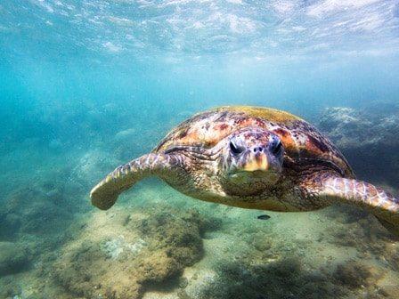 PADI Underwater Naturalist Course