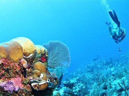 Belize Two-Tank Diving Tour